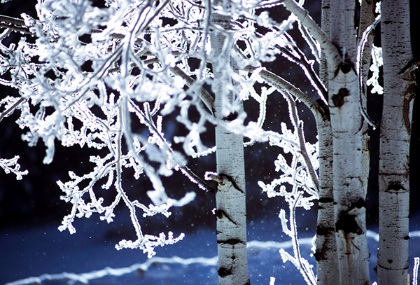 Icy trees light up by the sunlight
