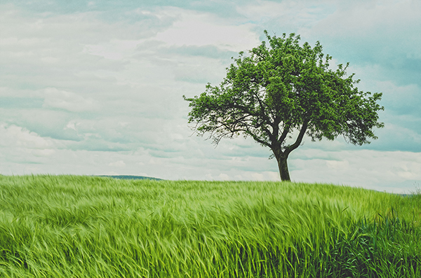 A tree standing alone in a prairie