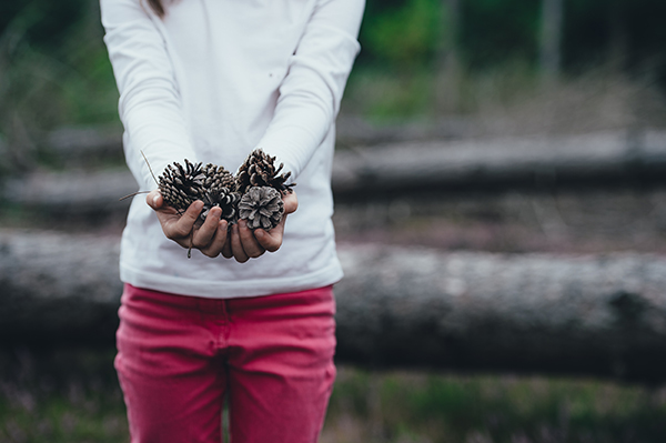 Young girl holding pine cones
